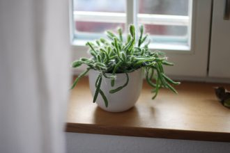 How plants create a healthier, more productive workplace