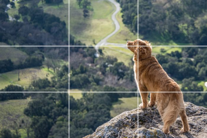 Using rule of thirds for improving composition in photography