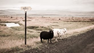 Conformity kills innovation: embrace your company's black sheep