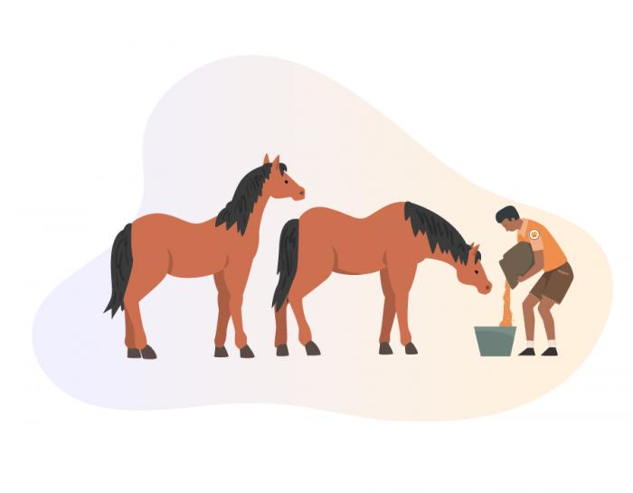 An animal rescue volunteer is feeding rescued horses